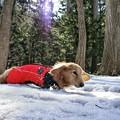 Photos: ザクザク雪で歩きずらいワン~♪