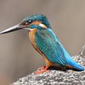 翡翠 カワセミ Kingfisher