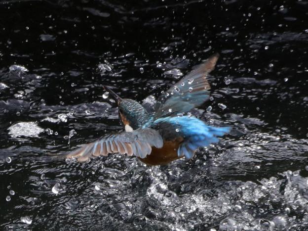 翡翠の水浴び