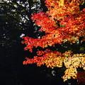 色付く季節
