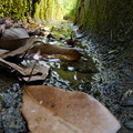 写真: 川の始まり