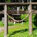 写真: 日枝神社