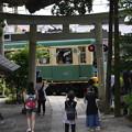 写真: 参道を走る江ノ電