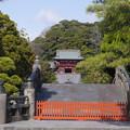 さようなら鶴岡八幡宮