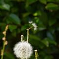Photos: 旅立ちの風