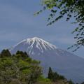 森の中から観る富士山