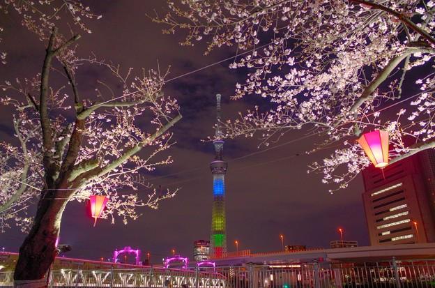 隅田公園の桜とスカイツリー(HDR)@東京都台東区(2019.3)