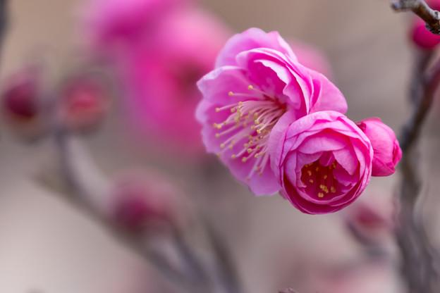 写真: 花香実