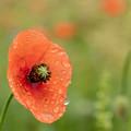 雨上がりの花壇の花 1