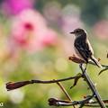 写真: お花畑のノビダキ 4