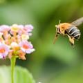 Photos: 公園花壇の昆虫 2