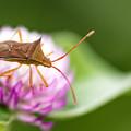 公園花壇の昆虫 5