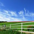 写真: 天空のポピー 3