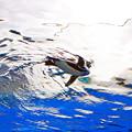 写真: サンシャイン水族館 空飛ぶペンギン 飛んでま~す