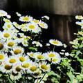 公園の片隅で咲き誇る…