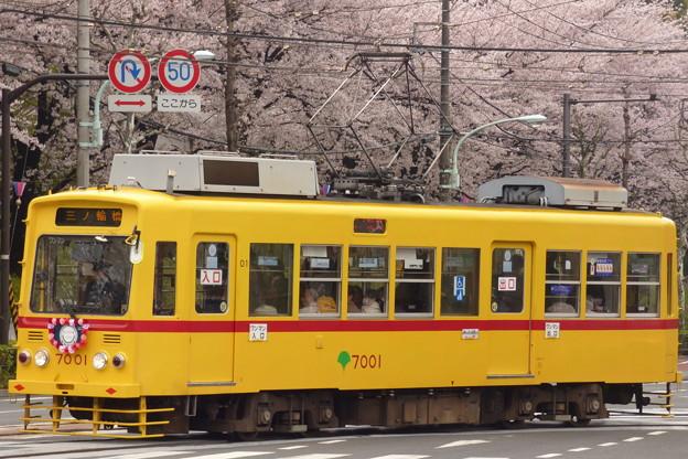 Photos: 2017年4月、飛鳥山にて…(3)