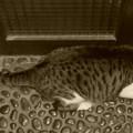 写真: 夜の玄関で佇む猫(2)