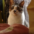 写真: 玄関に佇む猫(1)