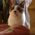 玄関に佇む猫(1)