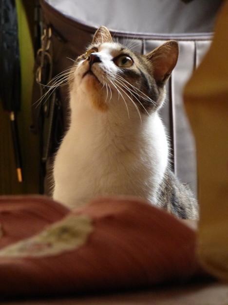 玄関に佇む猫(2)