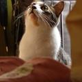 写真: 玄関に佇む猫(2)