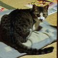 茶の間で佇む猫