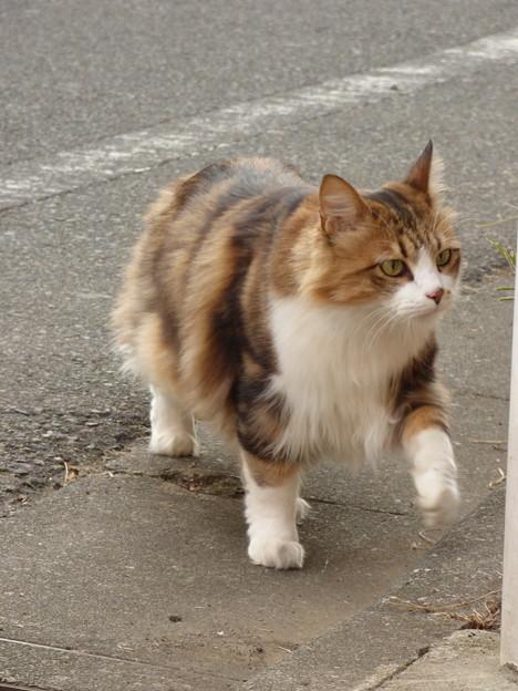 気ままに闊歩する猫