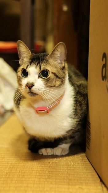 座敷の奥で佇む猫