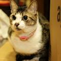 Photos: 座敷の奥で佇む猫