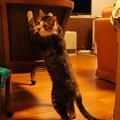 Photos: 「おもてなし」の練習…!?