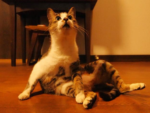 年末年始を過ごす猫(2)