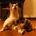 Photos: 年末年始を過ごす猫(2)