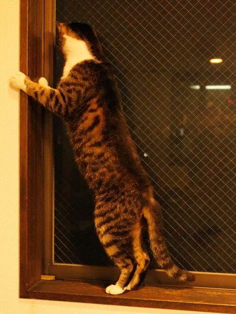 年末年始を過ごす猫(3)