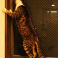 Photos: 年末年始を過ごす猫(3)