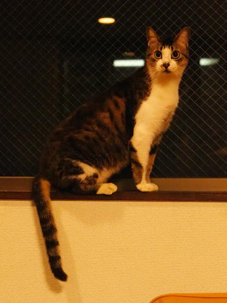 年末年始を過ごす猫(4)