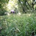 写真: 201205-05-008PZ
