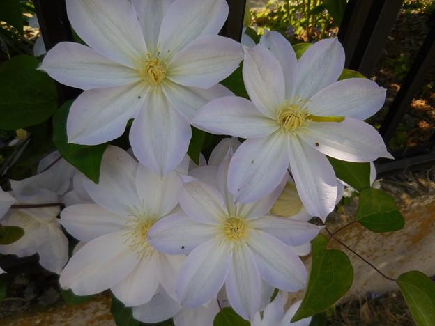 綺麗な花には虫がつく
