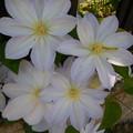 写真: 綺麗な花には虫がつく