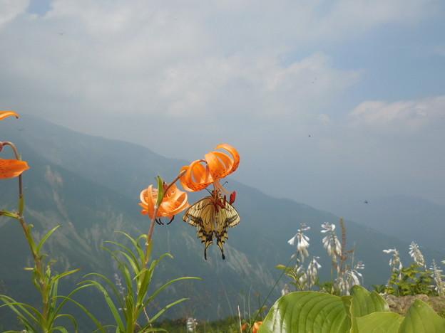 白馬の花と蝶