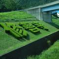 Photos: 緑の字