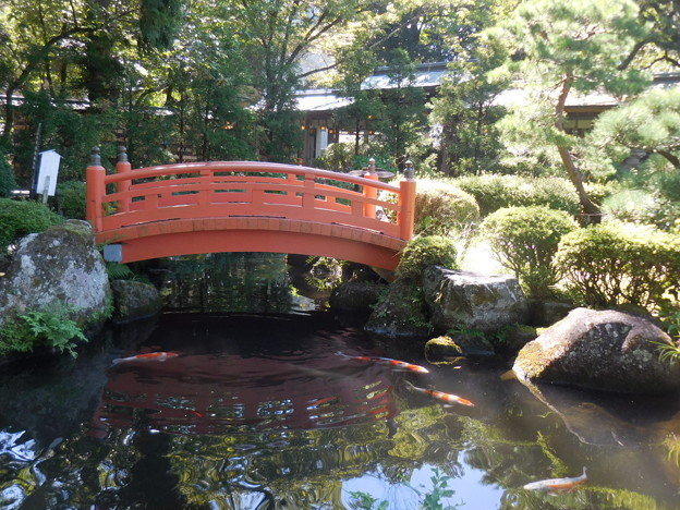 赤い橋と鯉