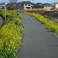 Photos: 菜の花の小道