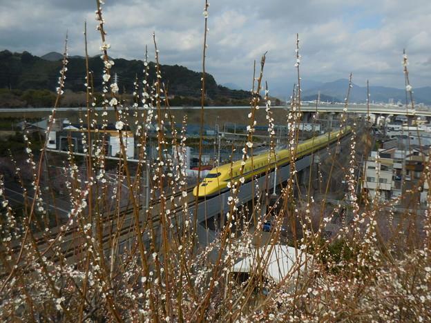 Photos: 梅薫る