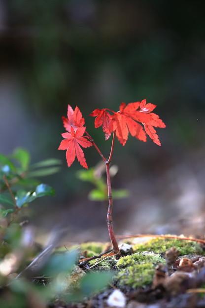 深まる秋。