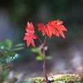 Photos: 深まる秋。