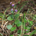 Photos: 不明の花