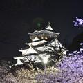 Photos: 大阪城と夜桜