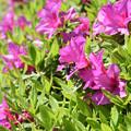 Photos: 蜂と花