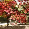 Photos: 万博公園の紅葉