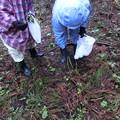 5.19-002 トリアシショウマを採る